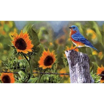Bluebird Sunflowers