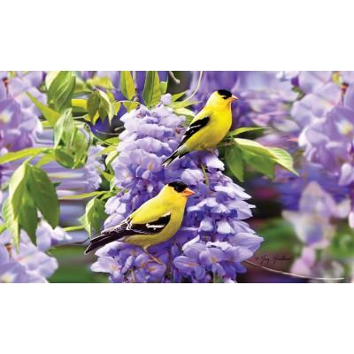 Goldfinch Wisteria