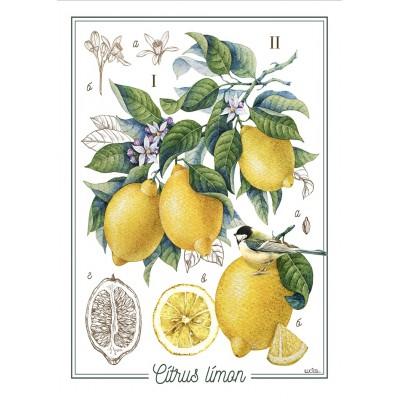 Linge à Vaisselle  100 % Cotton Citrus Limon