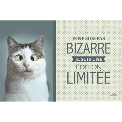 Coussin Chat Bizarre