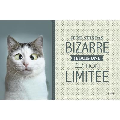 Coussin Chat Bizarre / Disponible Août 2019
