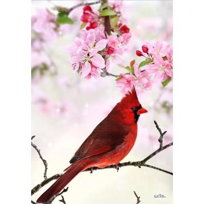L'éclatant cardinal rouge/ Nouveauté-Pre-booking 2021
