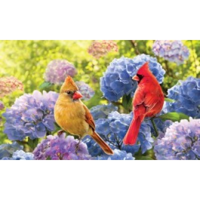 Cardinals in Hydrangeas