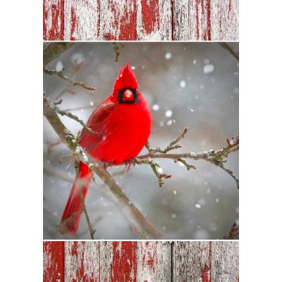 Cardinal sur la branche  - Nouveauté-hiver -Pre-booking 2021-22