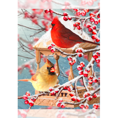 Cardinal dans les baies - Nouveauté-hiver -Pre-booking 2021-22